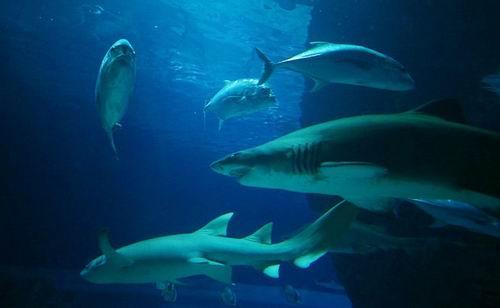 鲨鱼身体结构清晰图