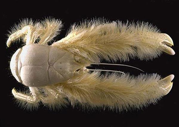 地球上形状最奇特的动物大盘点