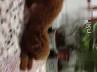 2010超级搞笑雷人原创小品!小日本鬼子进村_音视频台悦图片