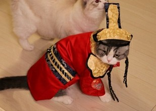 教主猫高清无码照 喵星人的可爱无敌了