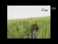 杨丽花歌仔戏-四季红主题曲-游戏视频 预告_1