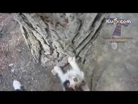 香港城/预告片超会爬树的猫咪们 搞笑视频合集/游戏视频