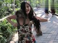 美女性感 游客遭色猴扯光衣服袭胸!