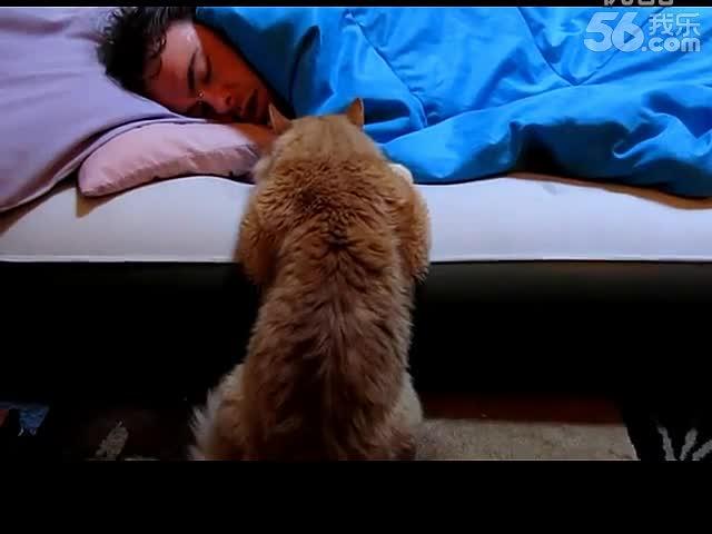 精华视频 [搞笑宠物]橘猫用眼神念力叫主人起床【欢乐宠物搞笑视频