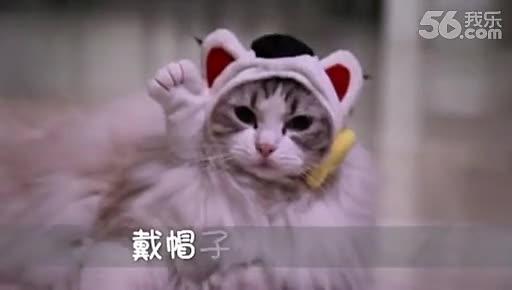 戴帽子的猫高清下载_戴帽子的猫百度影音【免费电影