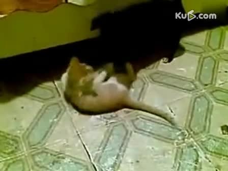 动物打架-360视频搜索