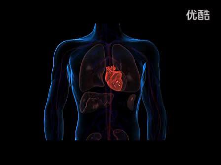 flv 生物七年级 心脏的 结构和功能视频-0002