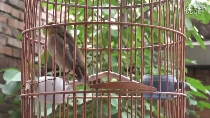 最热 麻料鸟叫声 正品叫声 正品e8蜡纳米技术操作视频 快