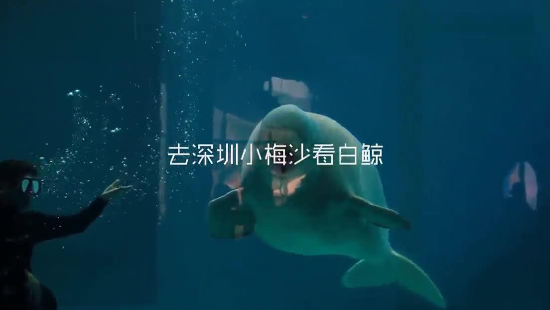 壁纸 动物 海底 海底世界 海洋馆 水族馆 鱼 鱼类 1104_622