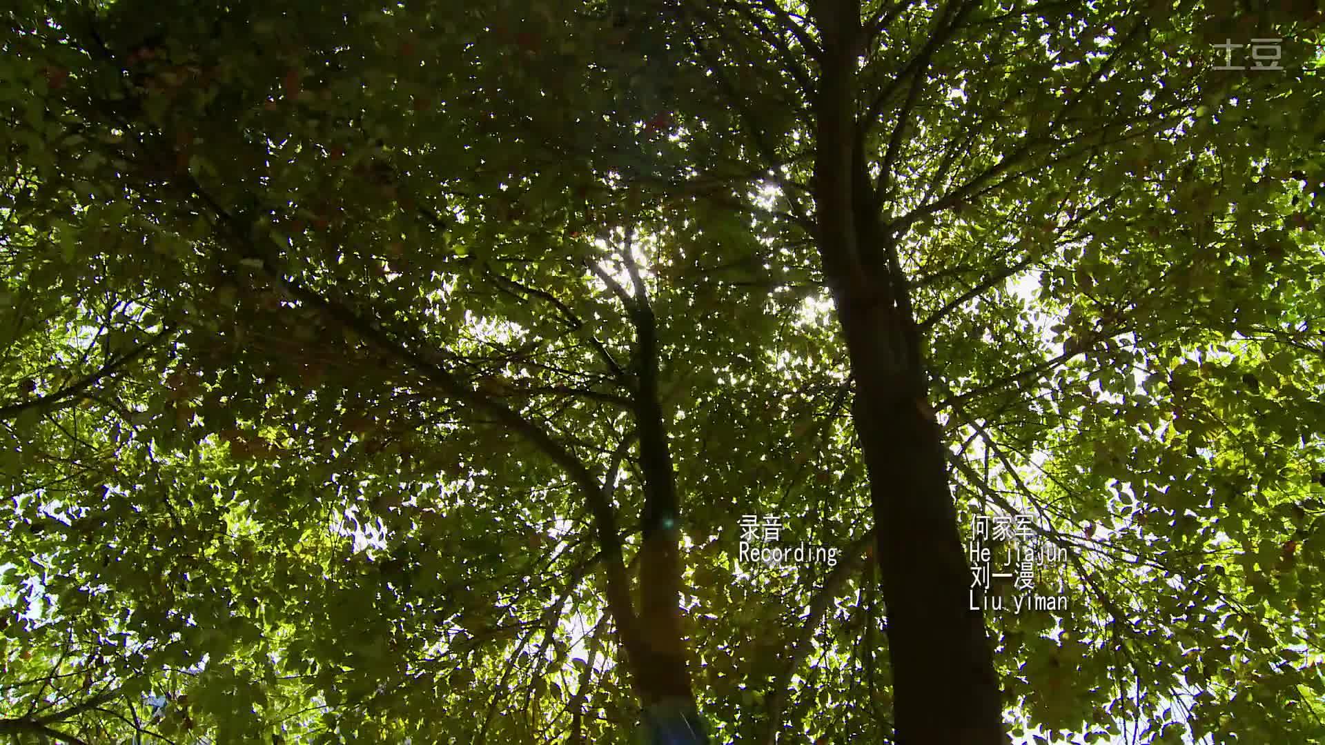 《怦然心动》完美高清-高清(1920x1080,278k)-怦然心动在线观看