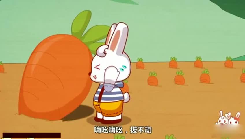 小兔子拔萝卜 小白兔拔萝卜 小兔子拔萝卜的故事 小兔子乖乖