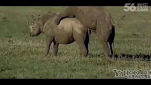 人与动物之性_动物世界性行为大全牛交配过程!-免费在线观看-360影视